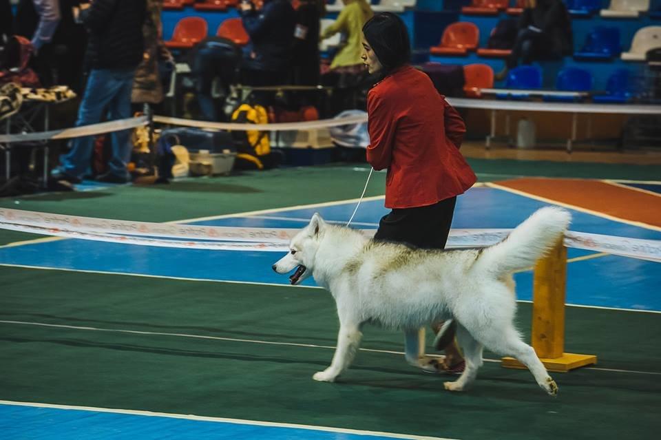 В Ужгороді проходить виставка собак (ФОТОРЕПОРТАЖ), фото-16