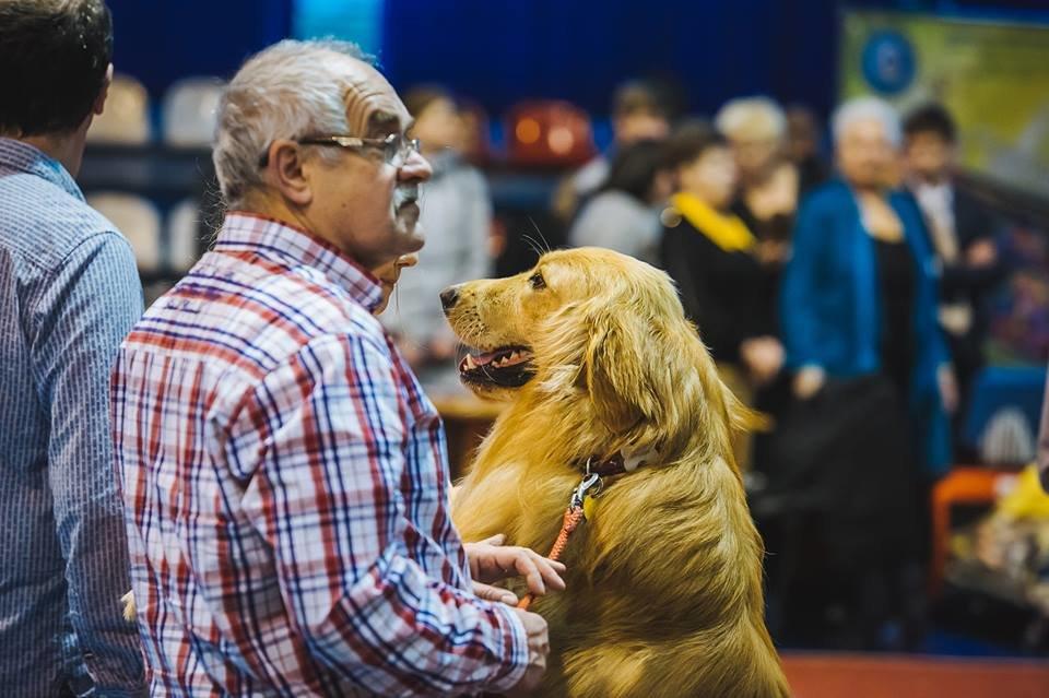 В Ужгороді проходить виставка собак (ФОТОРЕПОРТАЖ), фото-17