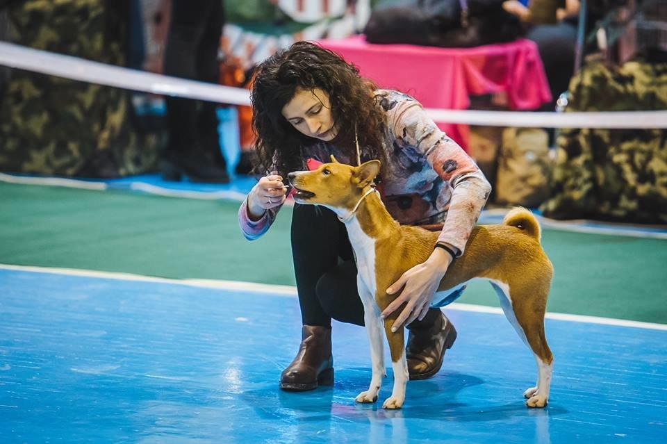 В Ужгороді проходить виставка собак (ФОТОРЕПОРТАЖ), фото-18