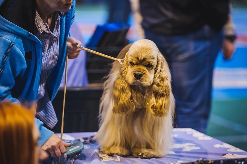 В Ужгороді проходить виставка собак (ФОТОРЕПОРТАЖ), фото-19
