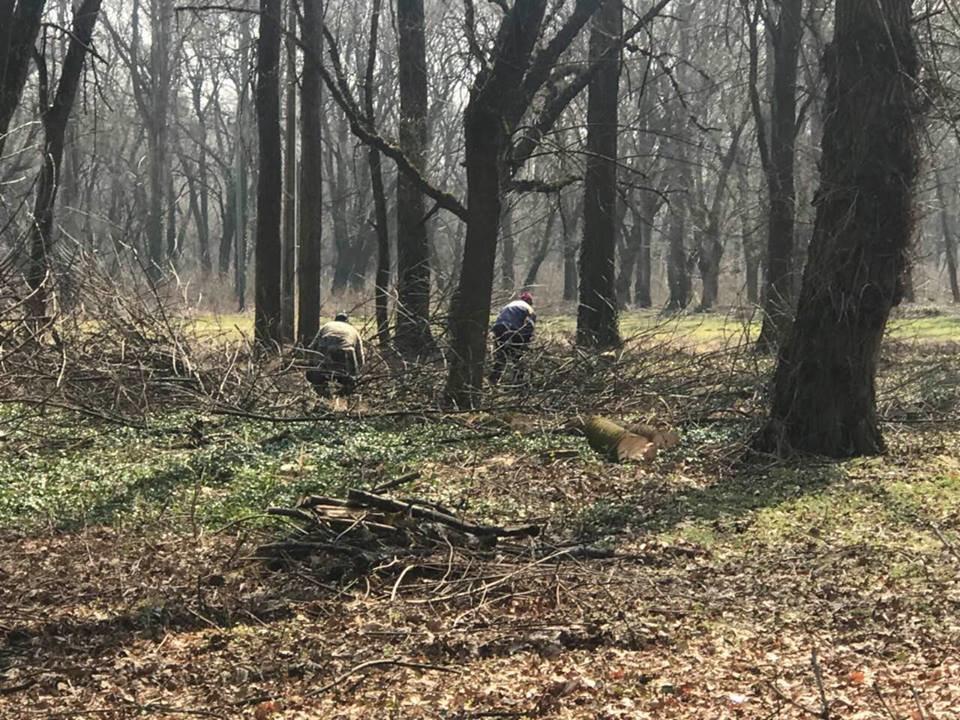 В Ужгороді розчищають Боздоський парк (ФОТО), фото-2