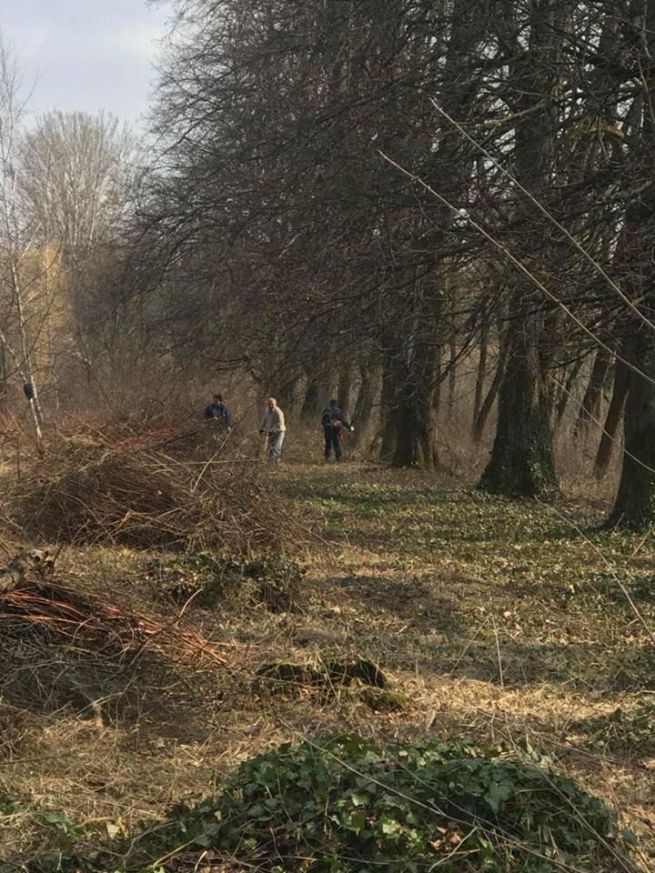 В Ужгороді розчищають Боздоський парк (ФОТО), фото-3