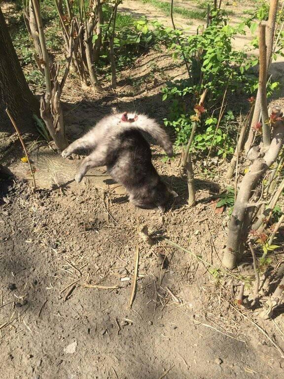 Соцмережі: в Ужгороді живодери насадили кішку на металевий стержень (ФОТО 18+), фото-2