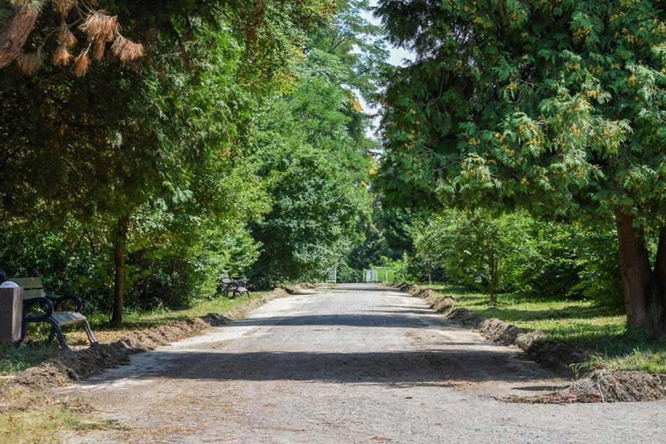 Рівні доріжки, оновлений понтонний міст: у Боздоському парку Ужгорода розпочались ремонтні роботи (ФОТО), фото-5
