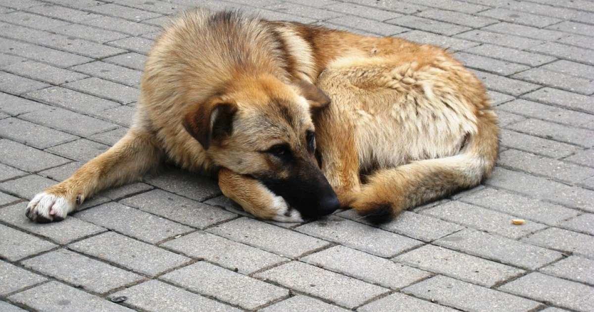 Безпритульні тварини: чим ужгородці можуть допомогти собакам та котам на вулицях Ужгорода, фото-1