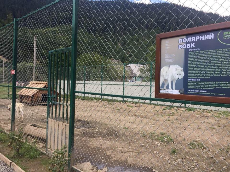 Соцмережі: туристи зафіксували жахливі умови перебування вовків в екопарку на Міжгірщині (ФОТО), фото-11