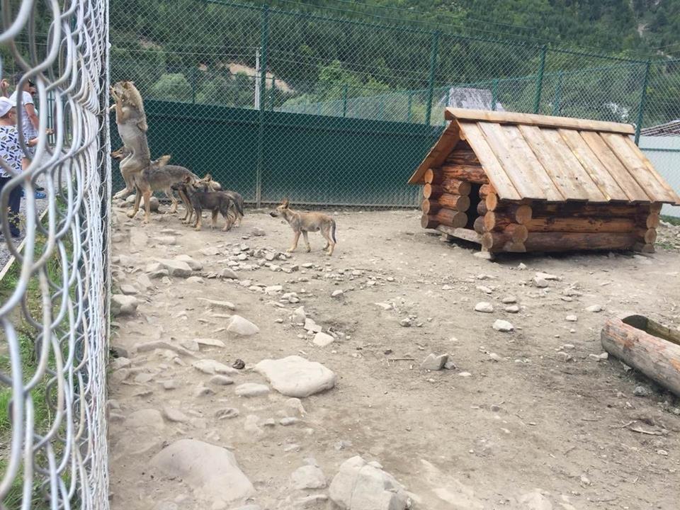 Соцмережі: туристи зафіксували жахливі умови перебування вовків в екопарку на Міжгірщині (ФОТО), фото-8