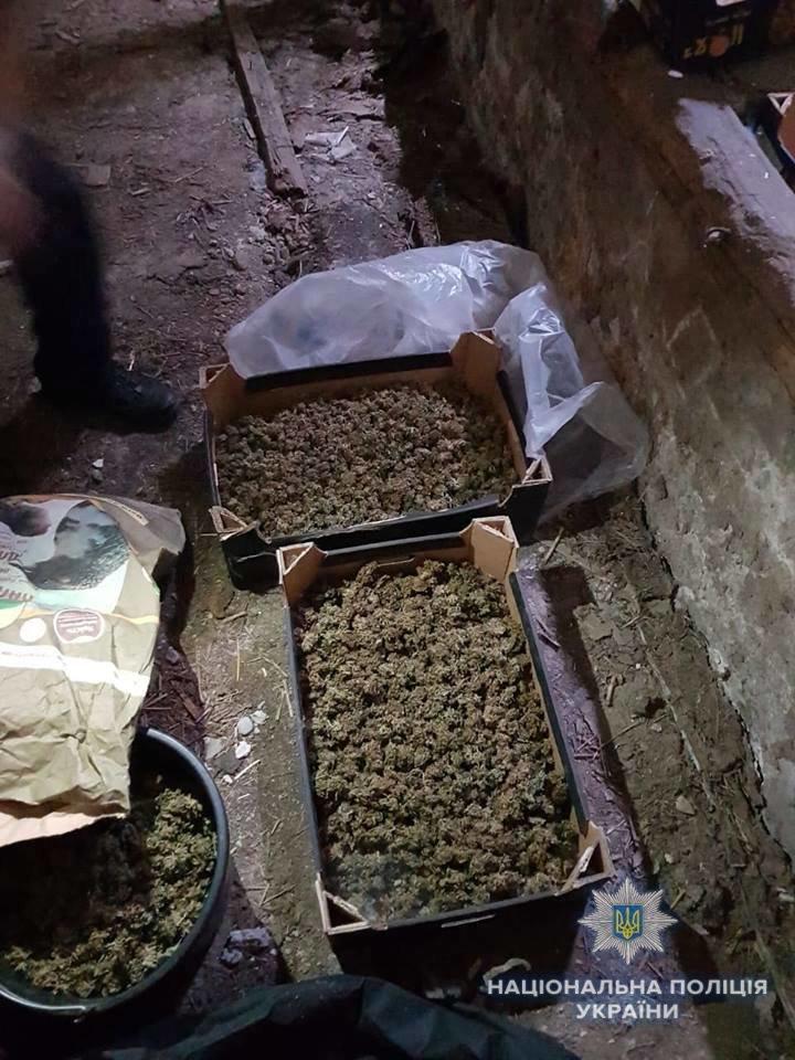 Біля Ужгорода знайшли плантацію марихуани розміром з гектар на 39 мільйонів гривень (ФОТО, ВІДЕО), фото-2