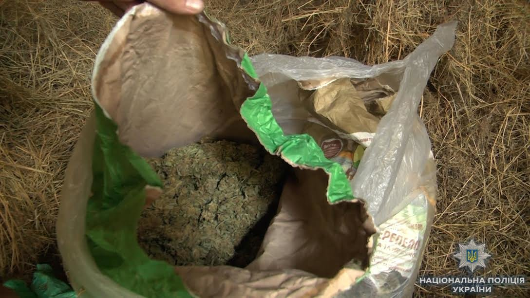 Біля Ужгорода знайшли плантацію марихуани розміром з гектар на 39 мільйонів гривень (ФОТО, ВІДЕО), фото-3
