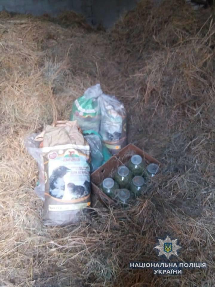 Біля Ужгорода знайшли плантацію марихуани розміром з гектар на 39 мільйонів гривень (ФОТО, ВІДЕО), фото-4