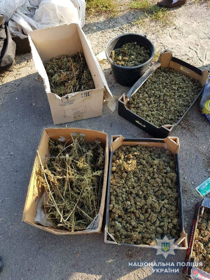 Біля Ужгорода знайшли плантацію марихуани розміром з гектар на 39 мільйонів гривень (ФОТО, ВІДЕО), фото-1