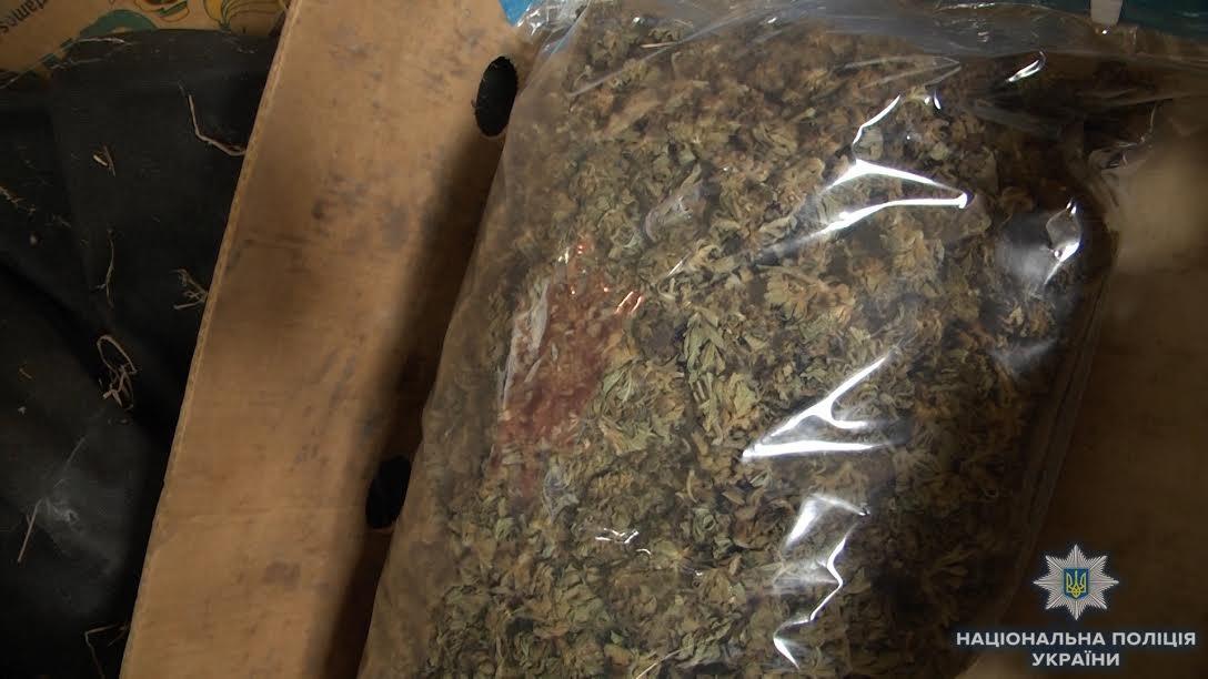 Біля Ужгорода знайшли плантацію марихуани розміром з гектар на 39 мільйонів гривень (ФОТО, ВІДЕО), фото-6