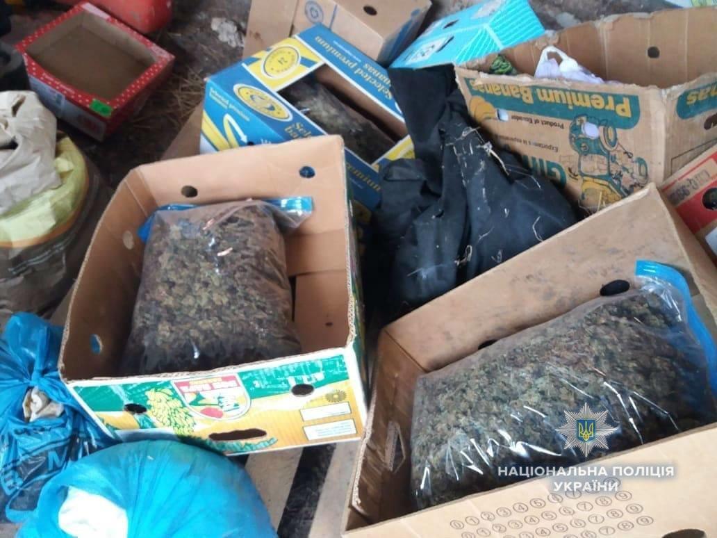 Біля Ужгорода знайшли плантацію марихуани розміром з гектар на 39 мільйонів гривень (ФОТО, ВІДЕО), фото-5