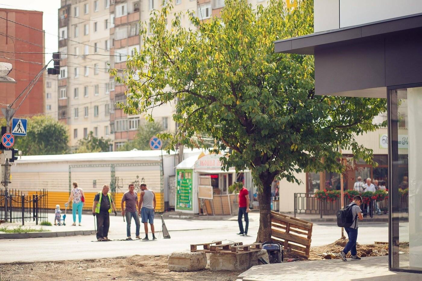 """Мерія сходить з розуму: в Ужгороді біля """"Токіо"""" почали вирубувати здорові дерева (ФОТО) , фото-6"""