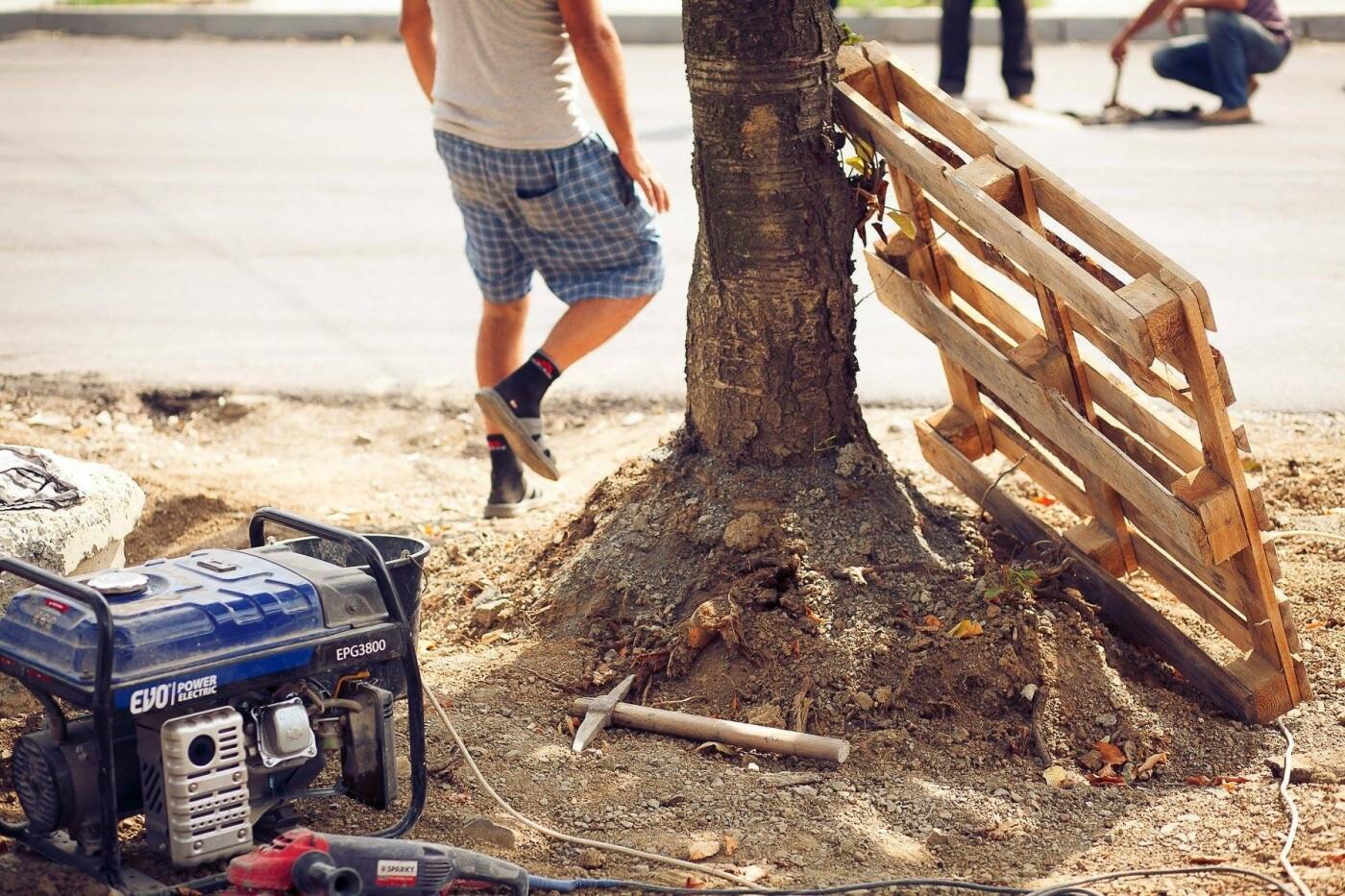 """Мерія сходить з розуму: в Ужгороді біля """"Токіо"""" почали вирубувати здорові дерева (ФОТО) , фото-7"""