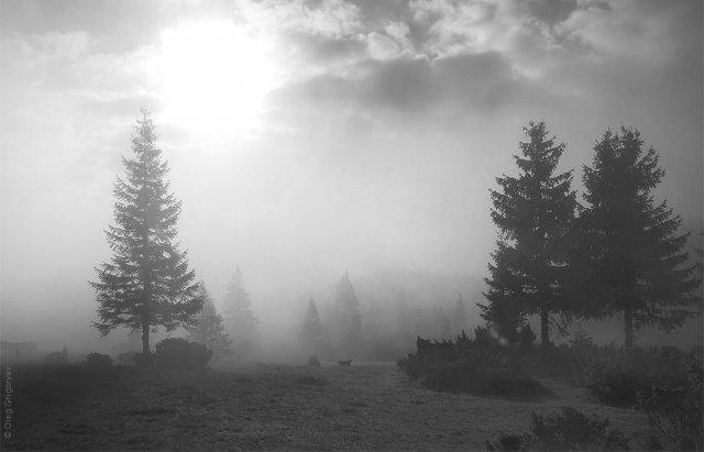 Як виглядають українські Карпати в чорно-білому кольорі (ФОТО), фото-2