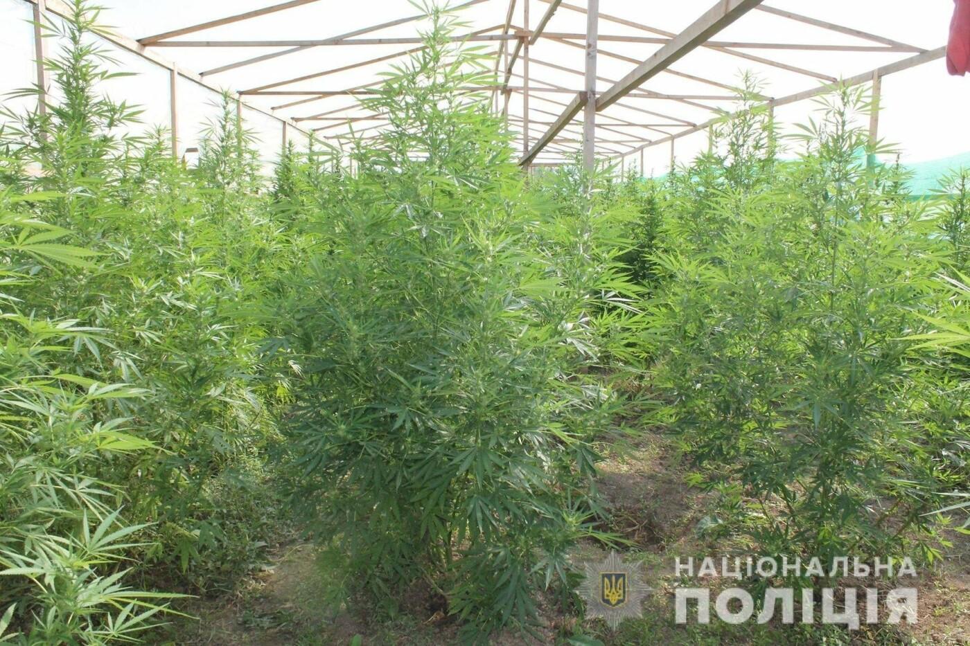 Плантація на 10 мільйонів гривень: на Закарпатті поліція виявила теплиці з марихуаною (ОПЕРАТИВНЕ ВІДЕО, ФОТО), фото-6