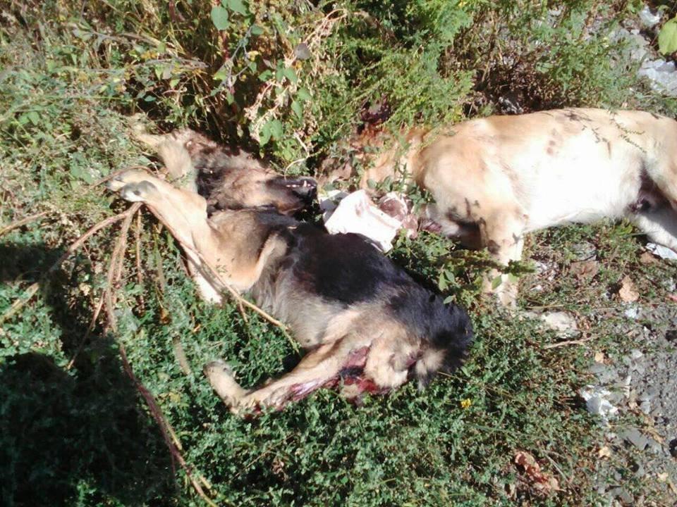 Жахлива знахідка: в Ужгороді неподалік житлових будинків знайшли закатованих собак, одну без голови (ВІДЕО, ФОТО16+), фото-2