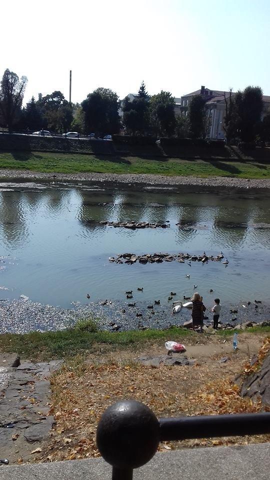 Ужгородці налякані неймовірно низьким рівнем води в Ужі (ФОТО), фото-1