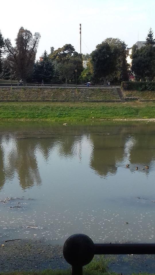 Ужгородці налякані неймовірно низьким рівнем води в Ужі (ФОТО), фото-2