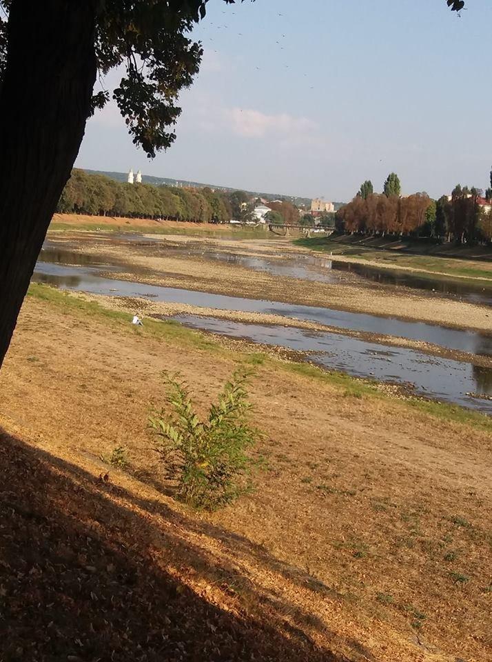 Ужгородці налякані неймовірно низьким рівнем води в Ужі (ФОТО), фото-5