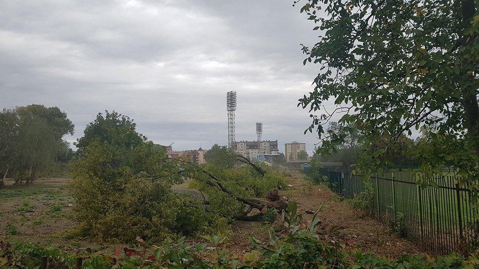 """В Ужгороді поруч """"Авангарда"""" вирубили десяток здорових дерев (ФОТОФАКТ), фото-2"""