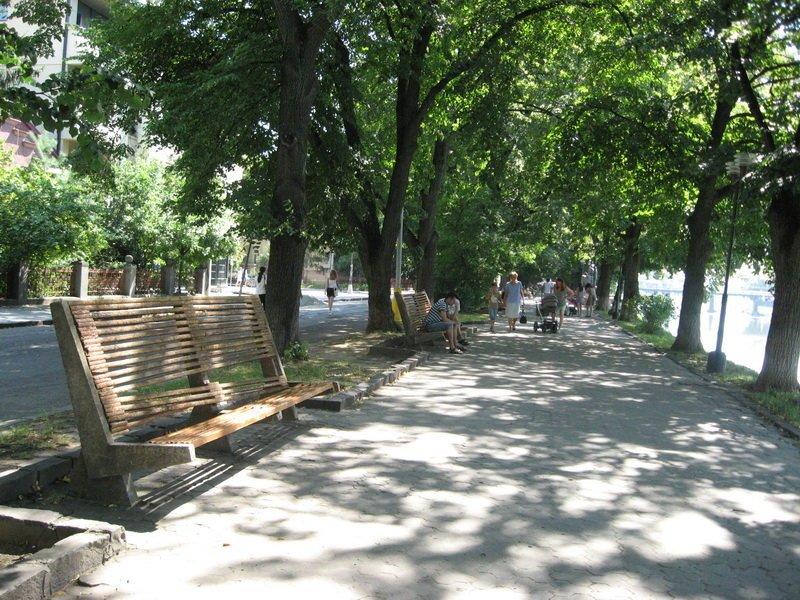Дендролог про реконструкцію набережної Незалежності в Ужгороді: Жодної загрози для лип немає (ВІДЕО), фото-1