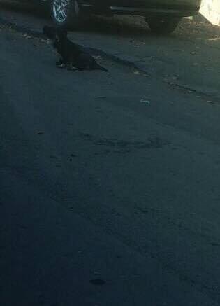 В Ужгороді на Тихій автівка збила собаку, водій поїхав, не зупинившись (ФОТО), фото-1