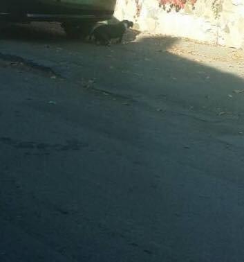 В Ужгороді на Тихій автівка збила собаку, водій поїхав, не зупинившись (ФОТО), фото-2