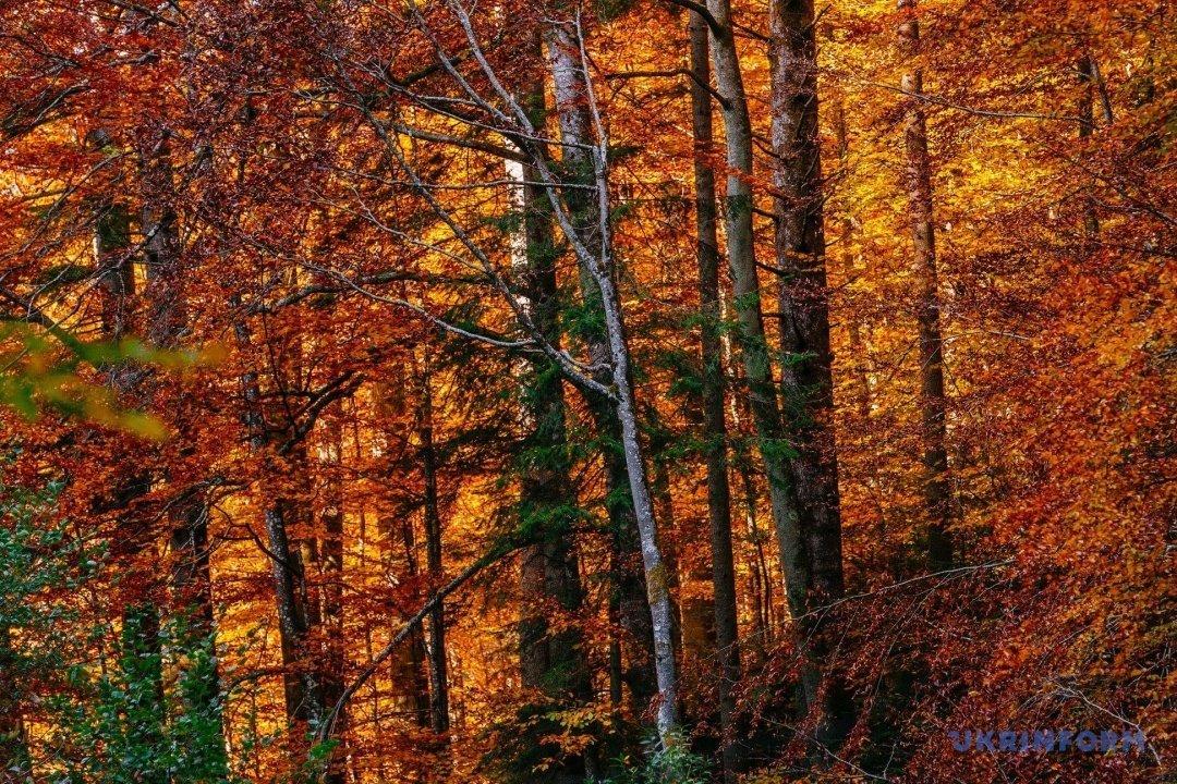 У мережі поділились барвистими фото осіннього закарпатського лісу (ФОТО), фото-9