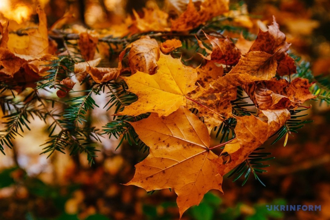 У мережі поділились барвистими фото осіннього закарпатського лісу (ФОТО), фото-1