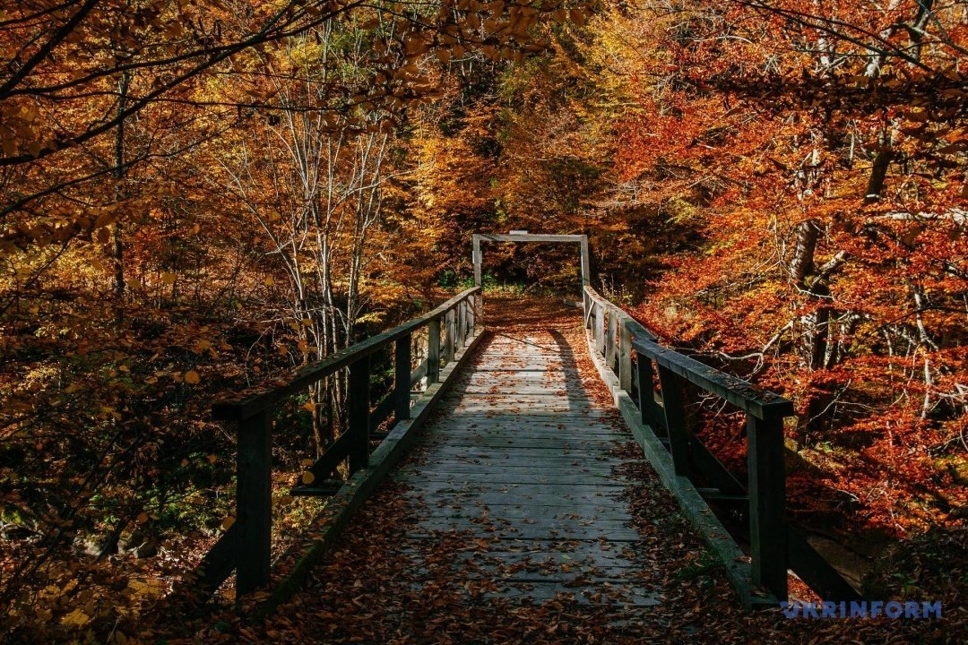 У мережі поділились барвистими фото осіннього закарпатського лісу (ФОТО), фото-8