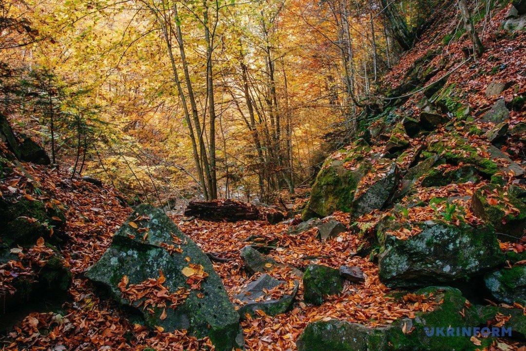 У мережі поділились барвистими фото осіннього закарпатського лісу (ФОТО), фото-7