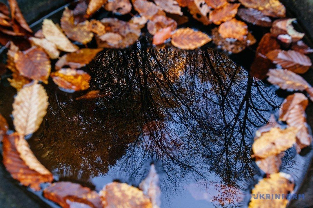 У мережі поділились барвистими фото осіннього закарпатського лісу (ФОТО), фото-3