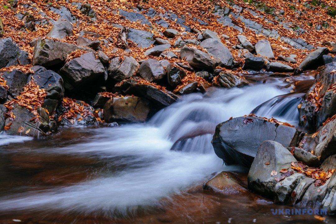 У мережі поділились барвистими фото осіннього закарпатського лісу (ФОТО), фото-6