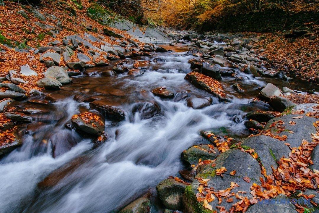 У мережі поділились барвистими фото осіннього закарпатського лісу (ФОТО), фото-4