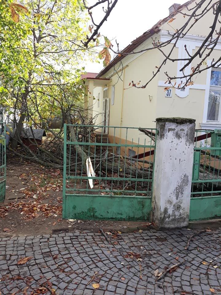 Наслідки негоди в Ужгороді (ОФІЦІЙНО, +ФОТО), фото-2