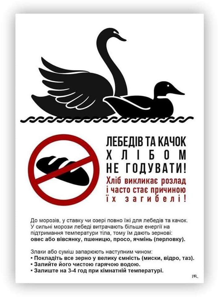 Не вдалось врятувати: В Ужгороді загинула ще одна лебідка (ФОТО), фото-8