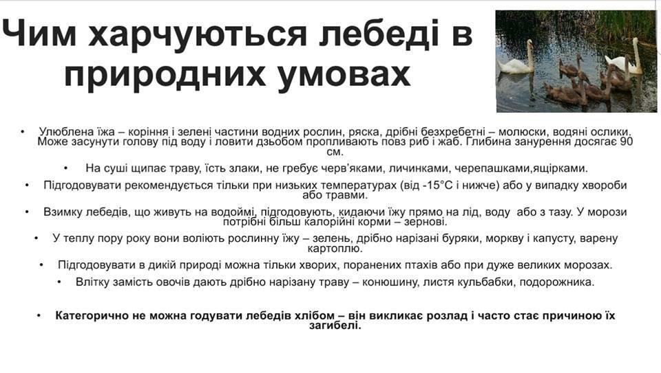 Не вдалось врятувати: В Ужгороді загинула ще одна лебідка (ФОТО), фото-9