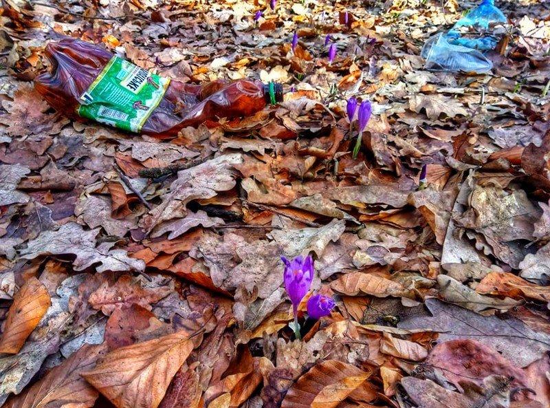 На Закарпатті шафранову долину очищували від сміття (ФОТО), фото-1