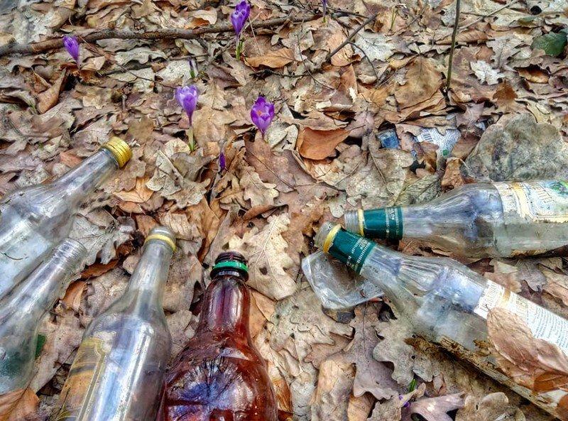 На Закарпатті шафранову долину очищували від сміття (ФОТО), фото-2