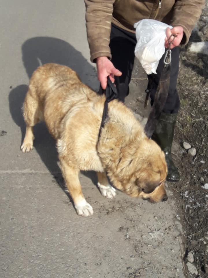 Герой дня: закарпатець врятував собаку, який 2 дні не міг вибратись з річки (ВІДЕО, ФОТО), фото-3