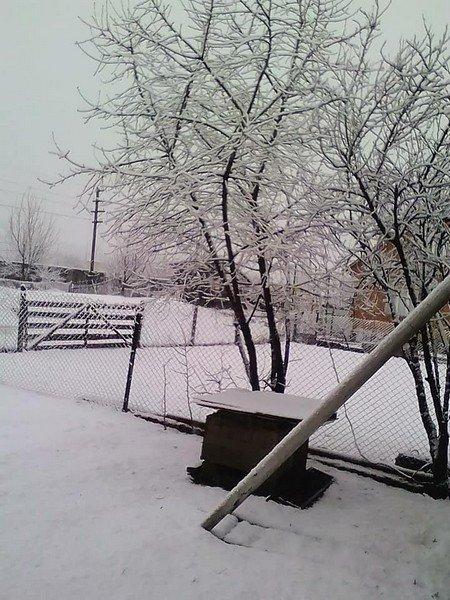 На Закарпатті у кількох районах випав сніг (ФОТОФАКТ), фото-1