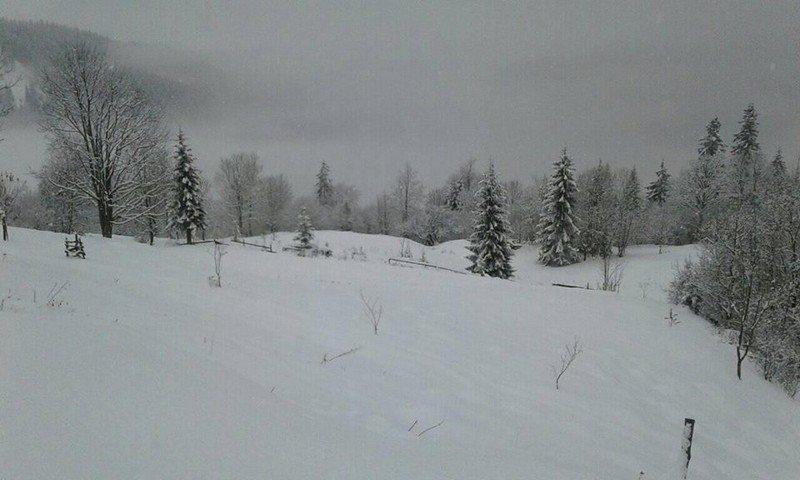 На Закарпатті у кількох районах випав сніг (ФОТОФАКТ), фото-6