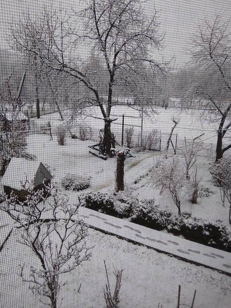 На Закарпатті у кількох районах випав сніг (ФОТОФАКТ), фото-3