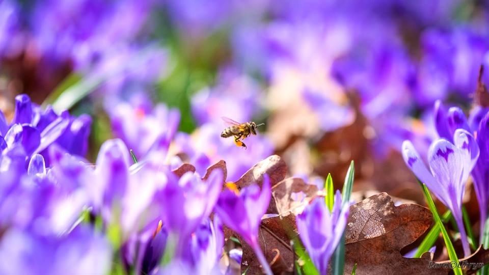 """Ужгородські фотографи показали фантастичні світлини """"фіолетового божевілля"""" у Карпатському лісі (ФОТО), фото-10"""
