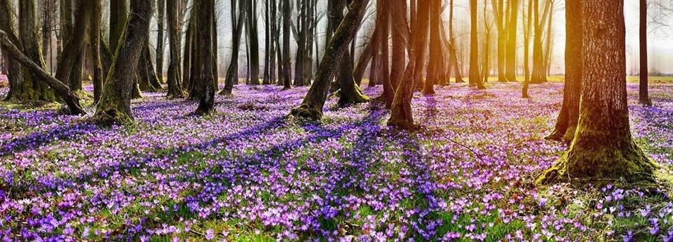 """Ужгородські фотографи показали фантастичні світлини """"фіолетового божевілля"""" у Карпатському лісі (ФОТО), фото-6"""