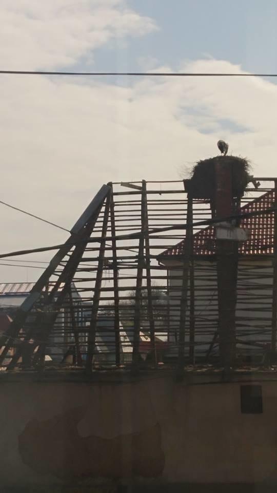 На Закарпатті під час знесення старого будинку врятували гніздо лелек (ФОТО), фото-1