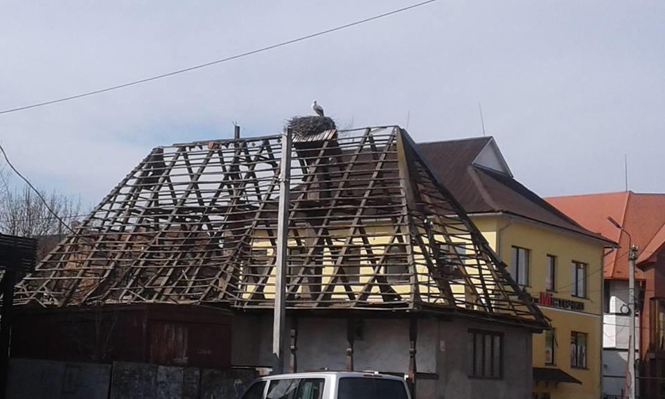 На Закарпатті під час знесення старого будинку врятували гніздо лелек (ФОТО), фото-2