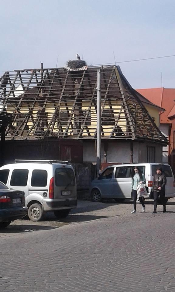 На Закарпатті під час знесення старого будинку врятували гніздо лелек (ФОТО), фото-4